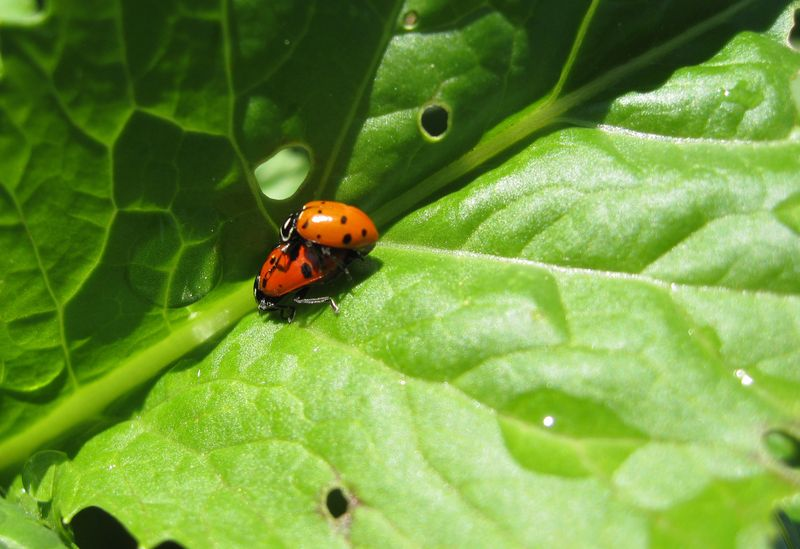 Bug 9