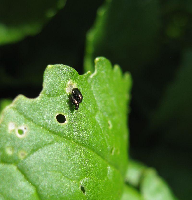 Bugs4