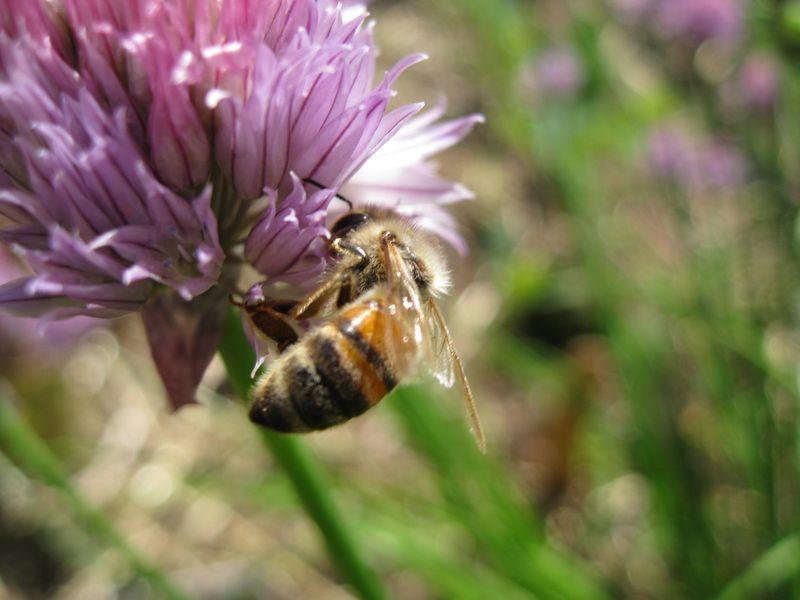 Bug 11