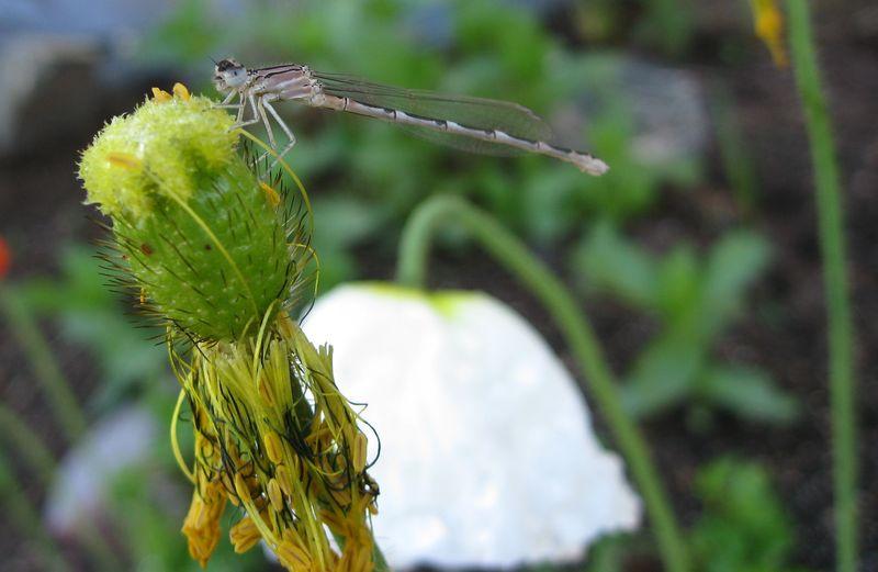 Bug 8
